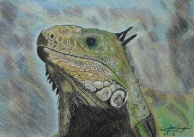 les-gaston-johnston-Iguana